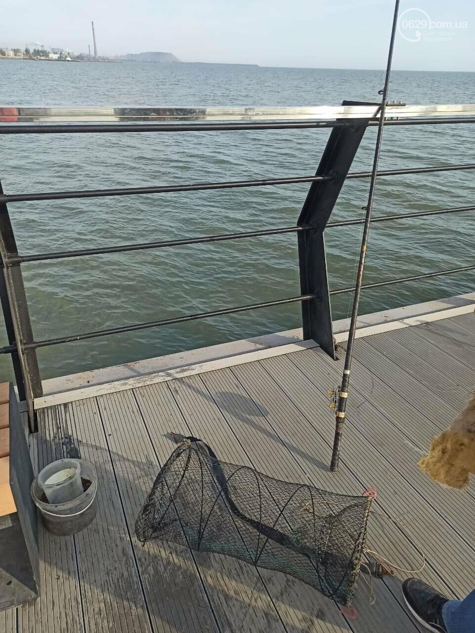 Безопасно ли есть мариупольскую рыбу? Получены результаты исследований, - ФОТО, ВИДЕО, ИНФОГРАФИКА, фото-5