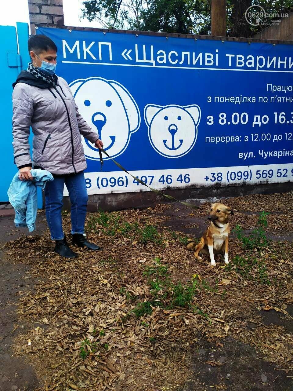 В Мариуполе жестоко надругались над собакой, - ФОТО, фото-1