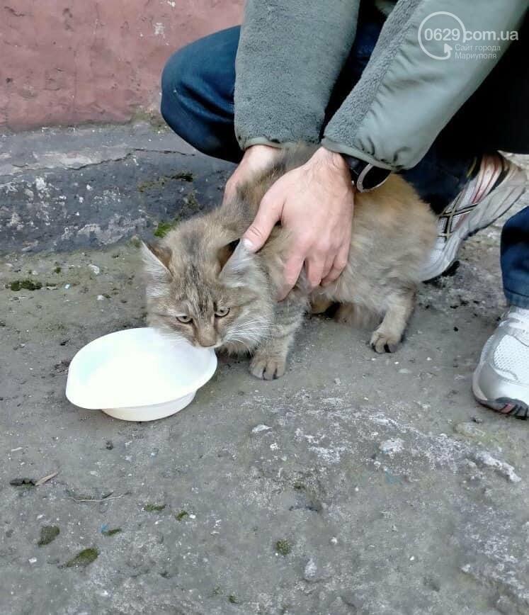 """Спецоперация """"кошка"""". Как в Мариуполе тепловизором зверя искали, - ФОТО, ВИДЕО, фото-3"""