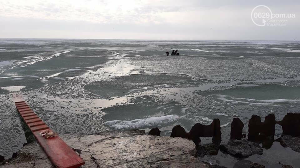 Спецоперация по спасению животных. В Мариуполе на льду застряли четыре собаки, -  ФОТО, фото-2