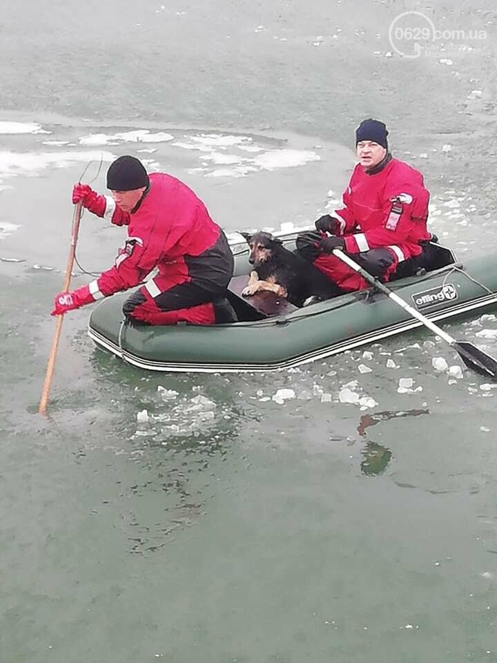 Спецоперация по спасению животных. В Мариуполе на льду застряли четыре собаки, -  ФОТО, фото-1