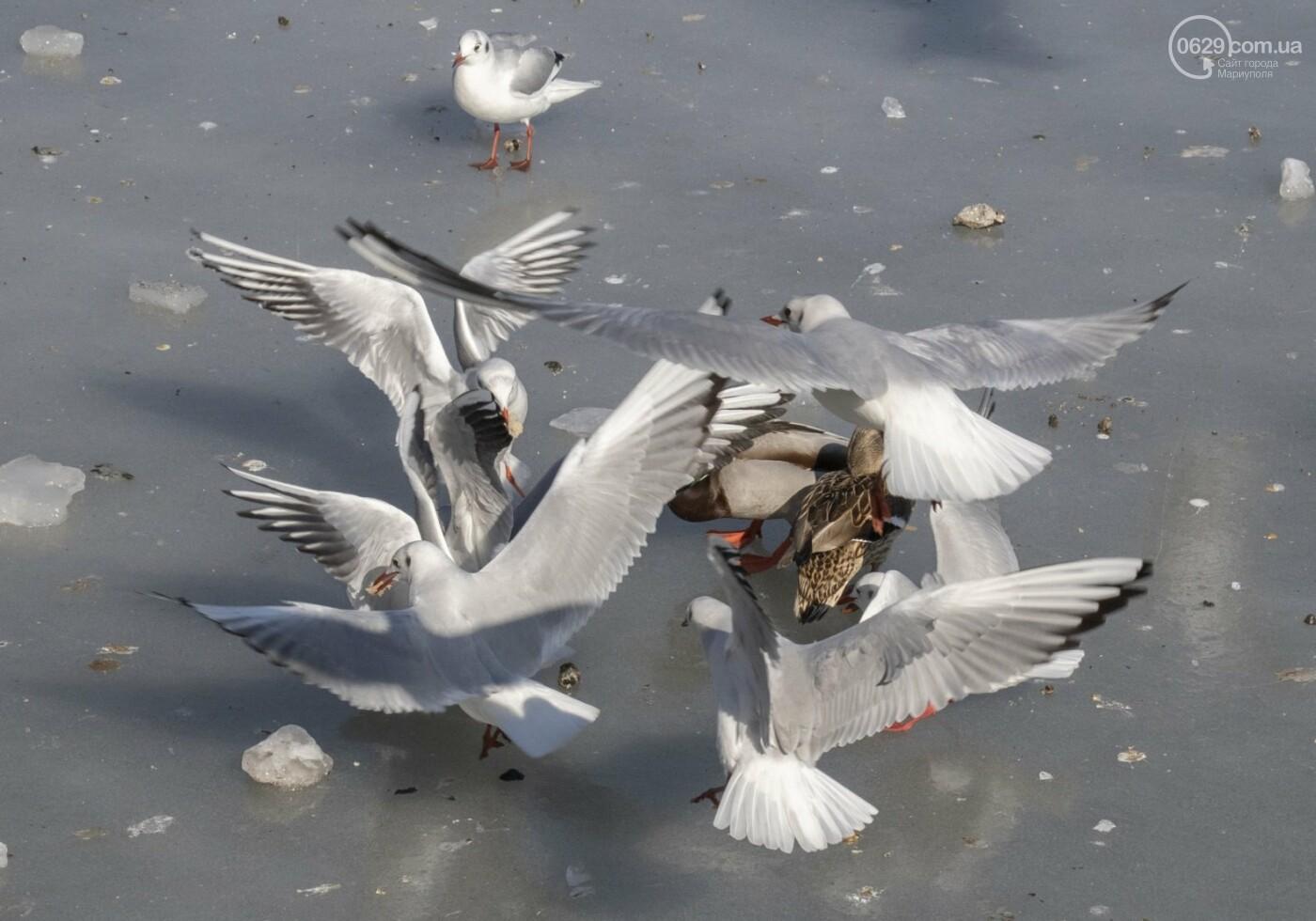 Встать в центр моря и не утонуть. 20 фотографий зимнего Азова в Мариуполе, - ФОТОРЕПОРТАЖ, фото-4