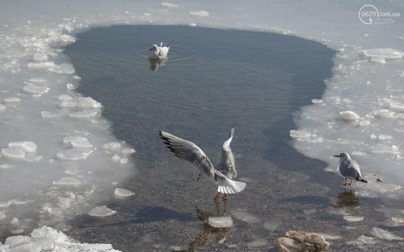 Встать в центр моря и не утонуть. 20 фотографий зимнего Азова в Мариуполе, - ФОТОРЕПОРТАЖ, фото-7
