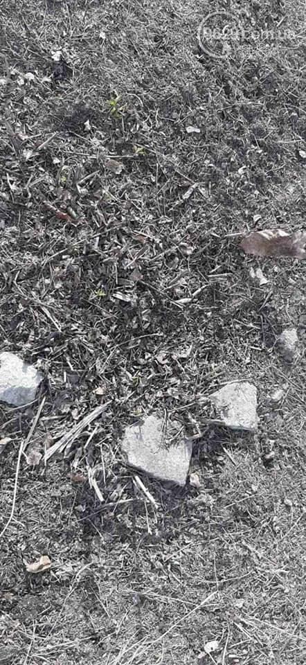Как зеленстроевцы уничтожили высаженные мариупольцами деревья, - ФОТО, ВИДЕО, фото-4