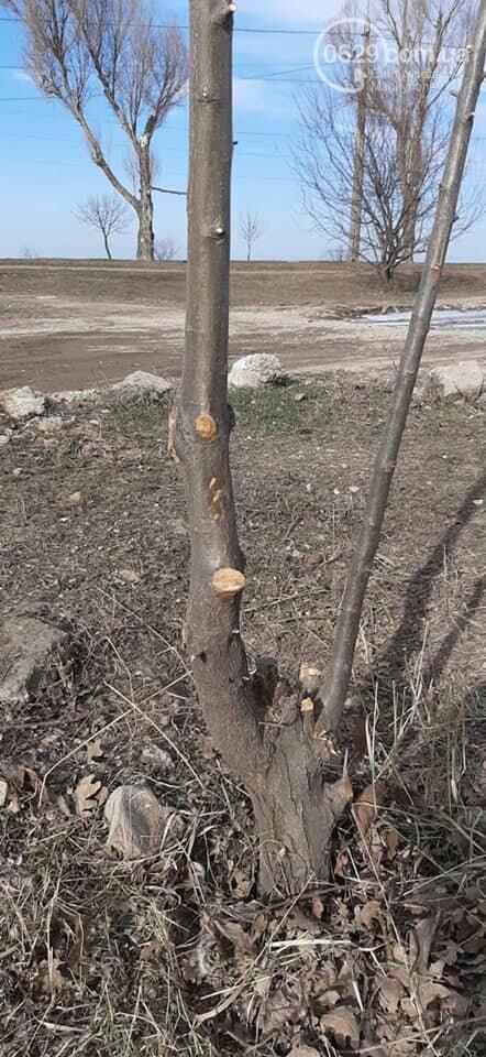Как зеленстроевцы уничтожили высаженные мариупольцами деревья, - ФОТО, ВИДЕО, фото-2
