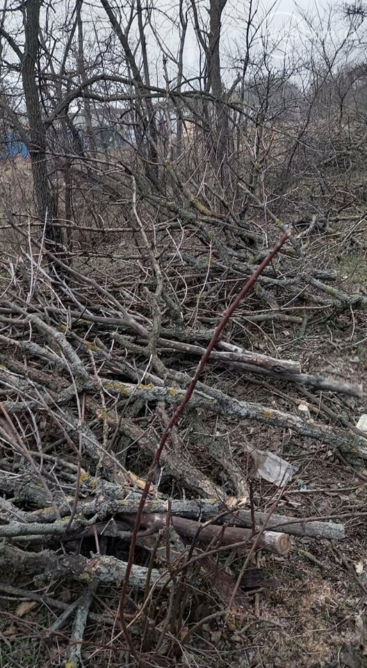 В мариупольском парке вырубят 800 деревьев,- ФОТО, фото-5