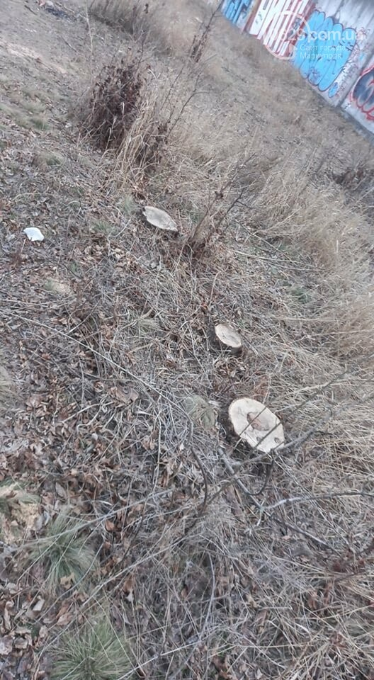 В мариупольском парке вырубят 800 деревьев,- ФОТО, фото-6