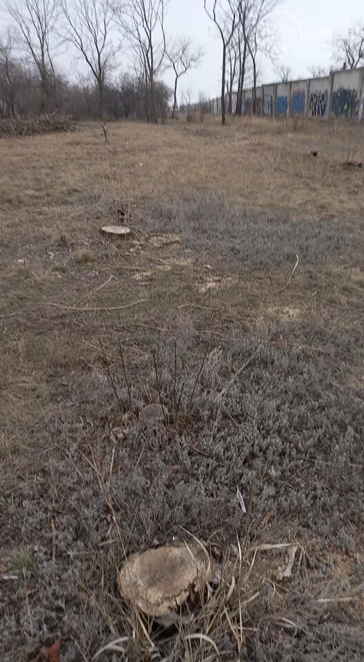 В мариупольском парке вырубят 800 деревьев,- ФОТО, фото-7