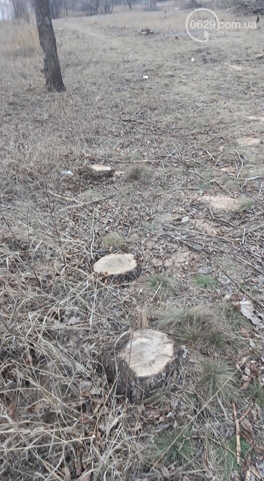 В мариупольском парке вырубят 800 деревьев,- ФОТО, фото-9