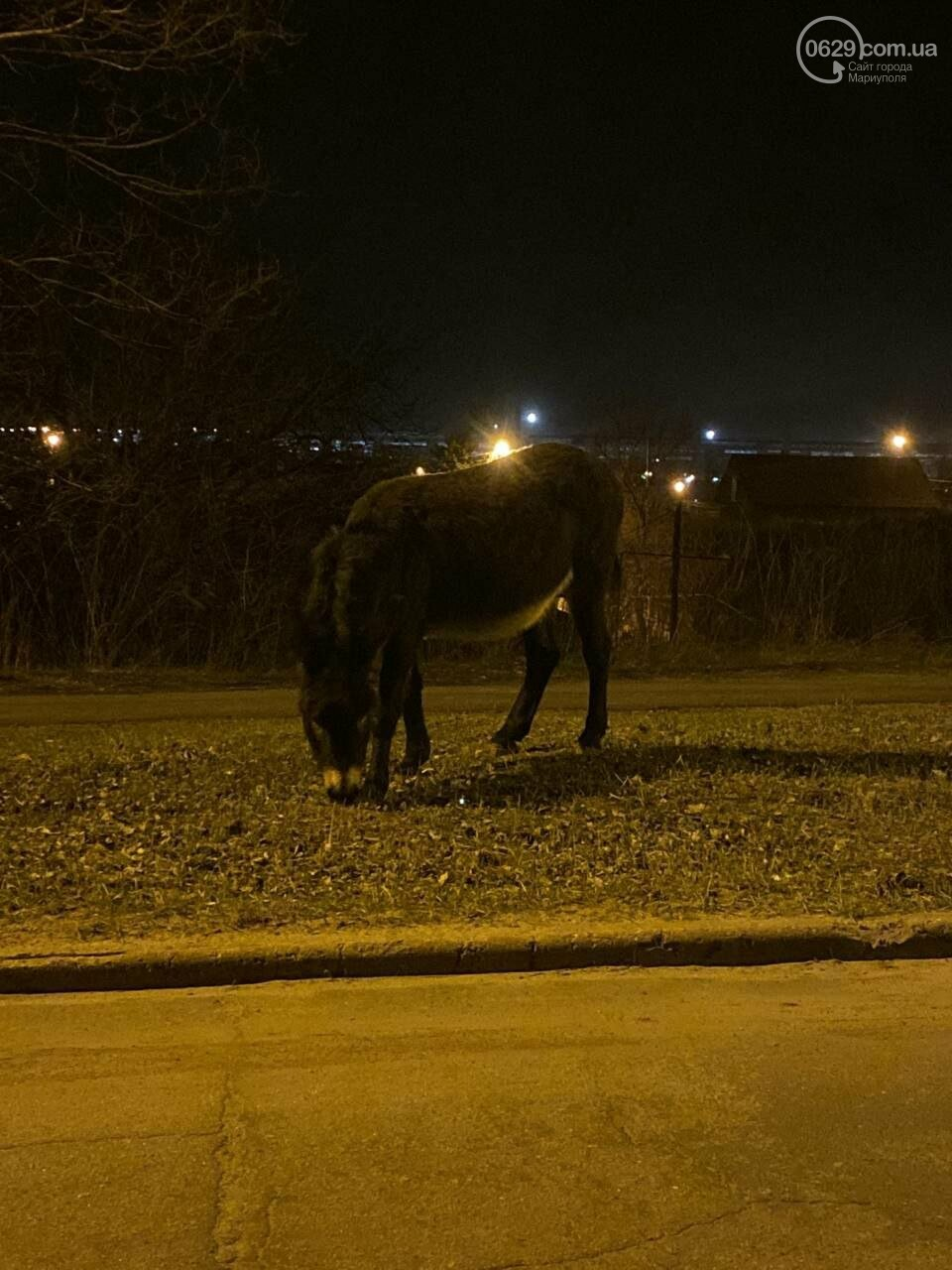 Мариупольских водителей напугали два осла, - ФОТО, фото-2