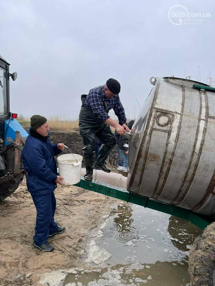 В ставок под Мариуполем запустили десятки тысяч мальков,- ФОТО, фото-1