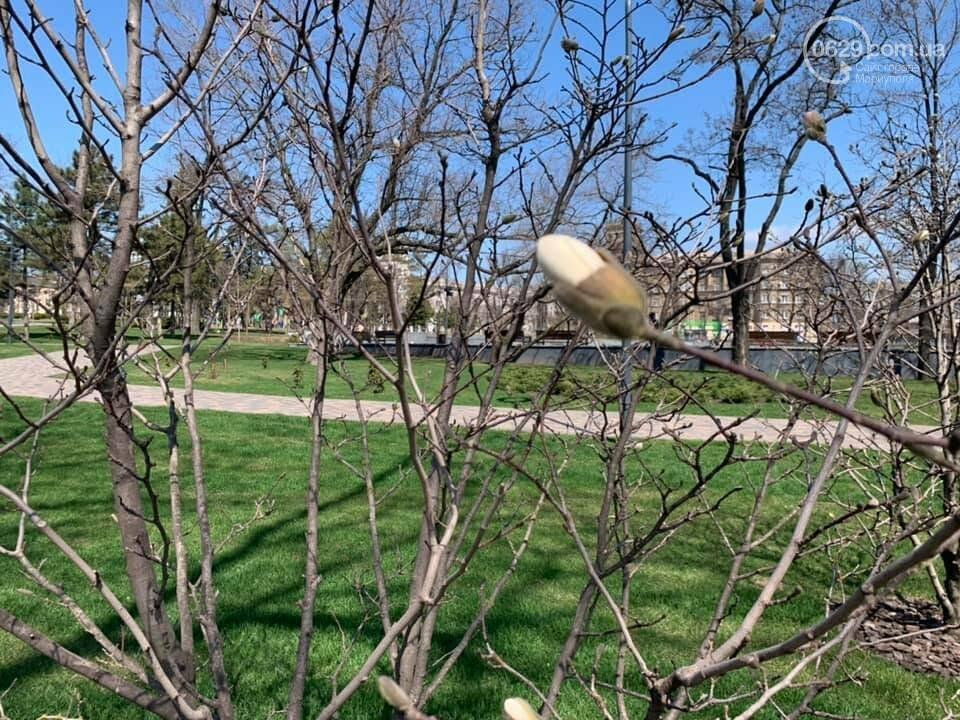 Где весна? Почему в Мариуполе до сих пор не расцвели магнолии, - ФОТО, ВИДЕО, фото-1