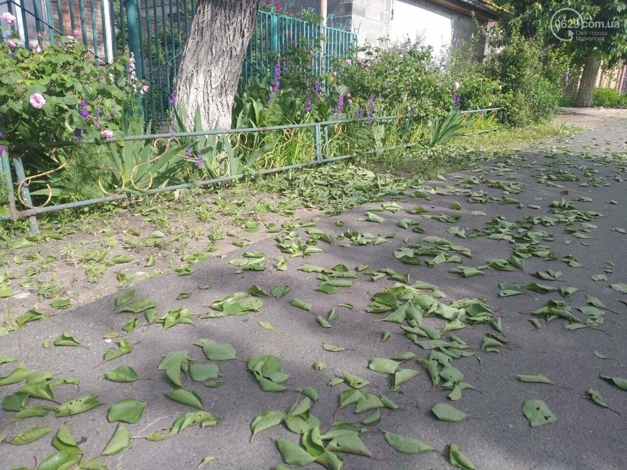 В Мариуполе абрикосы внезапно сбросили листья, - ФОТОФАКТ, фото-1