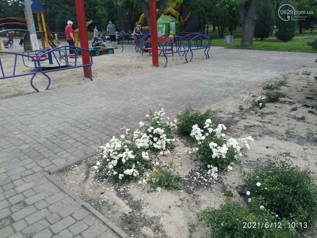 В парке Победы после потопа снова оставили скошенную траву, - ФОТОФАКТ, фото-8