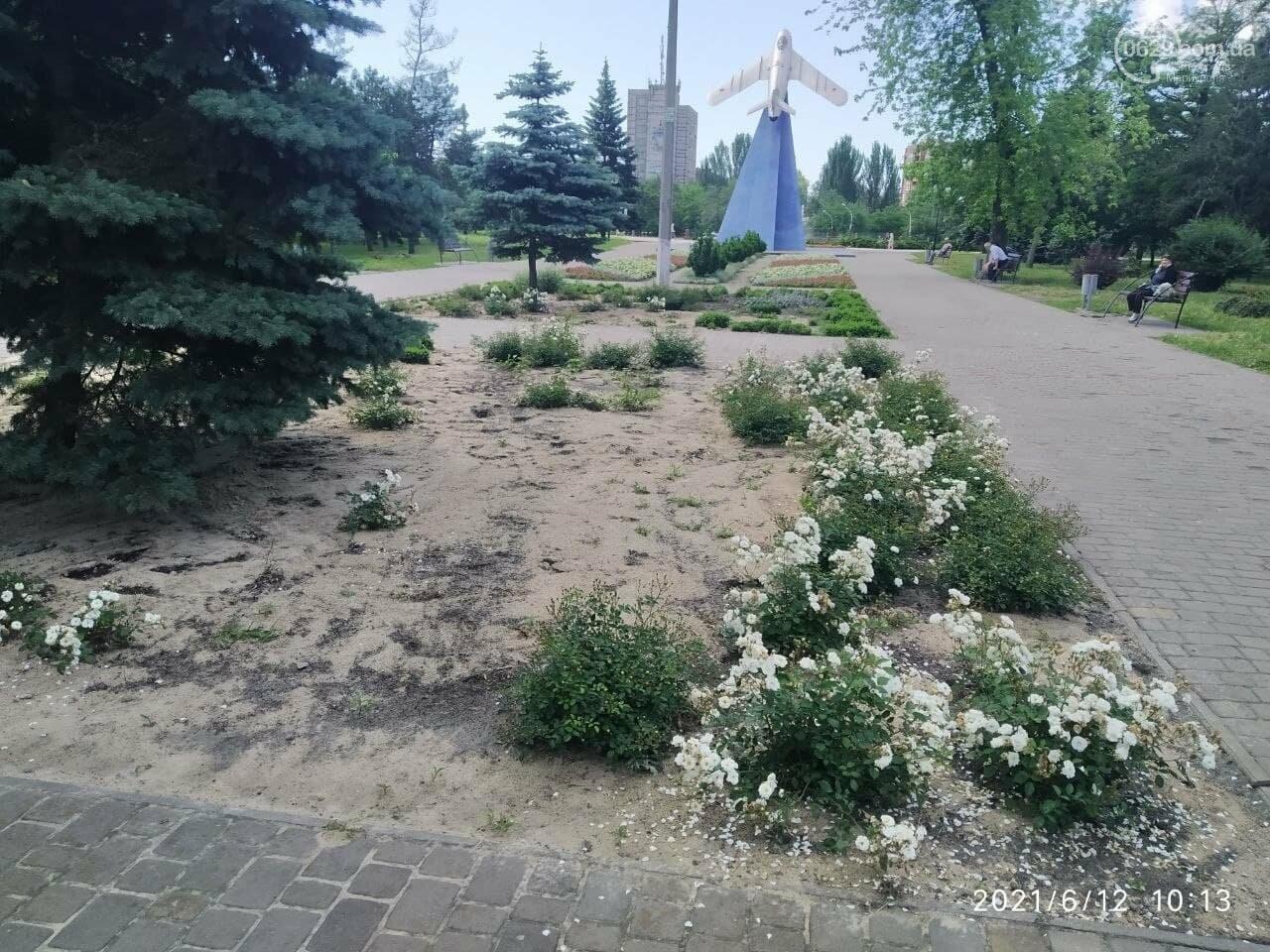 В парке Победы после потопа снова оставили скошенную траву, - ФОТОФАКТ, фото-7