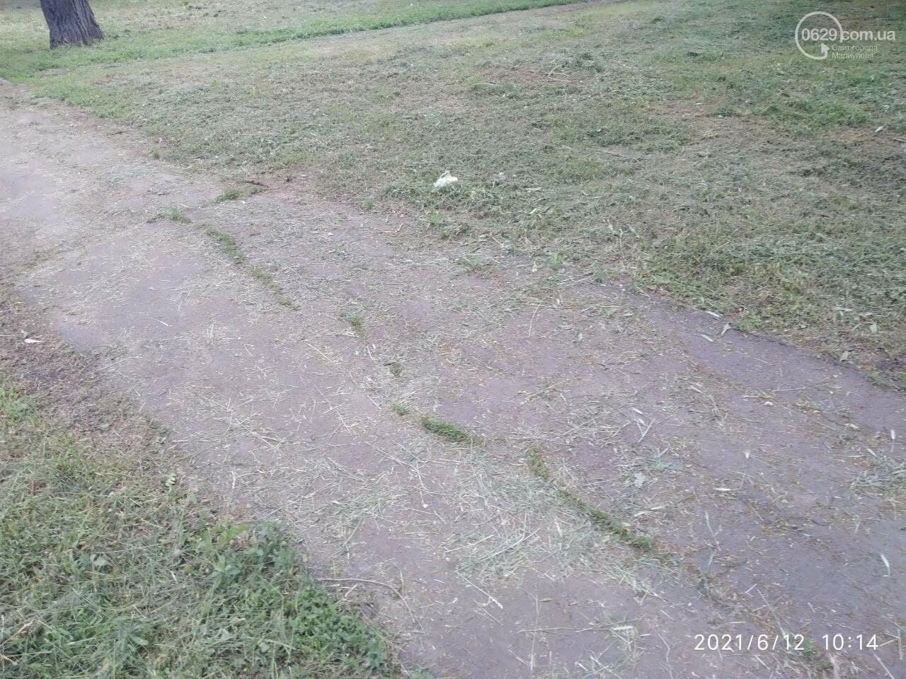 В парке Победы после потопа снова оставили скошенную траву, - ФОТОФАКТ, фото-6