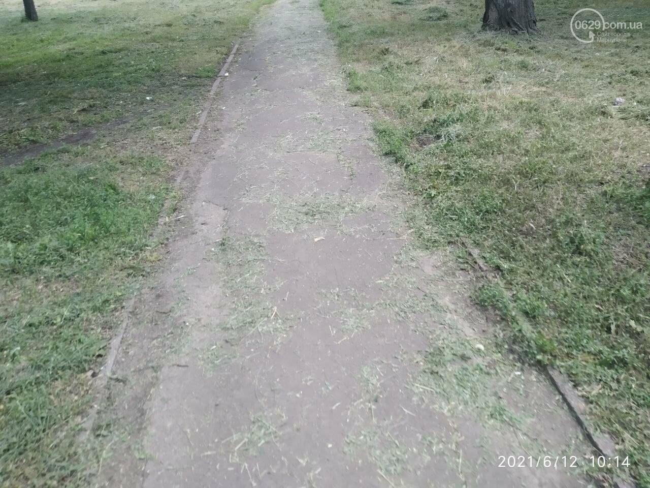В парке Победы после потопа снова оставили скошенную траву, - ФОТОФАКТ, фото-3