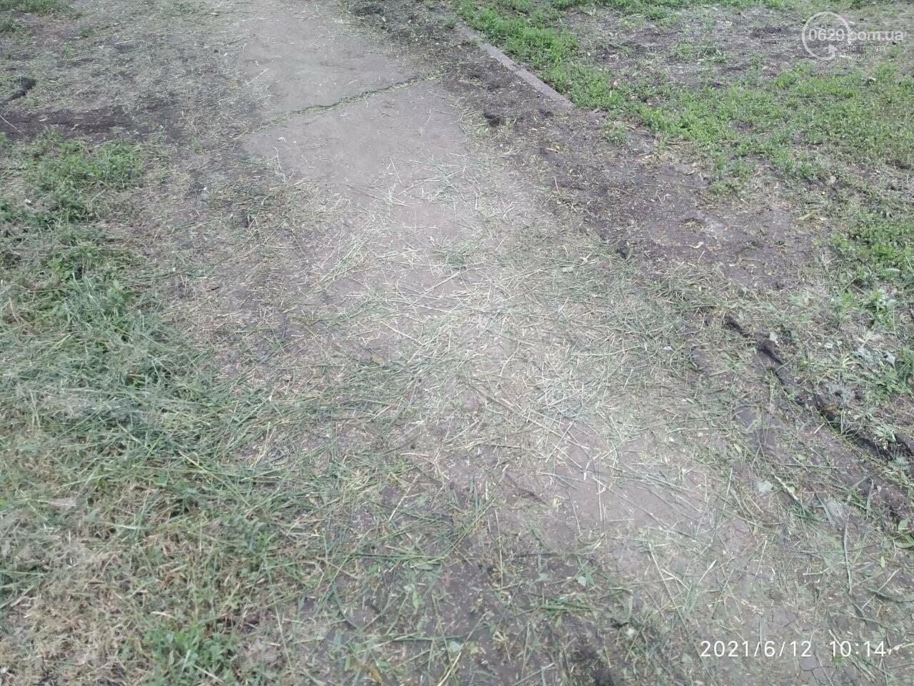 В парке Победы после потопа снова оставили скошенную траву, - ФОТОФАКТ, фото-5