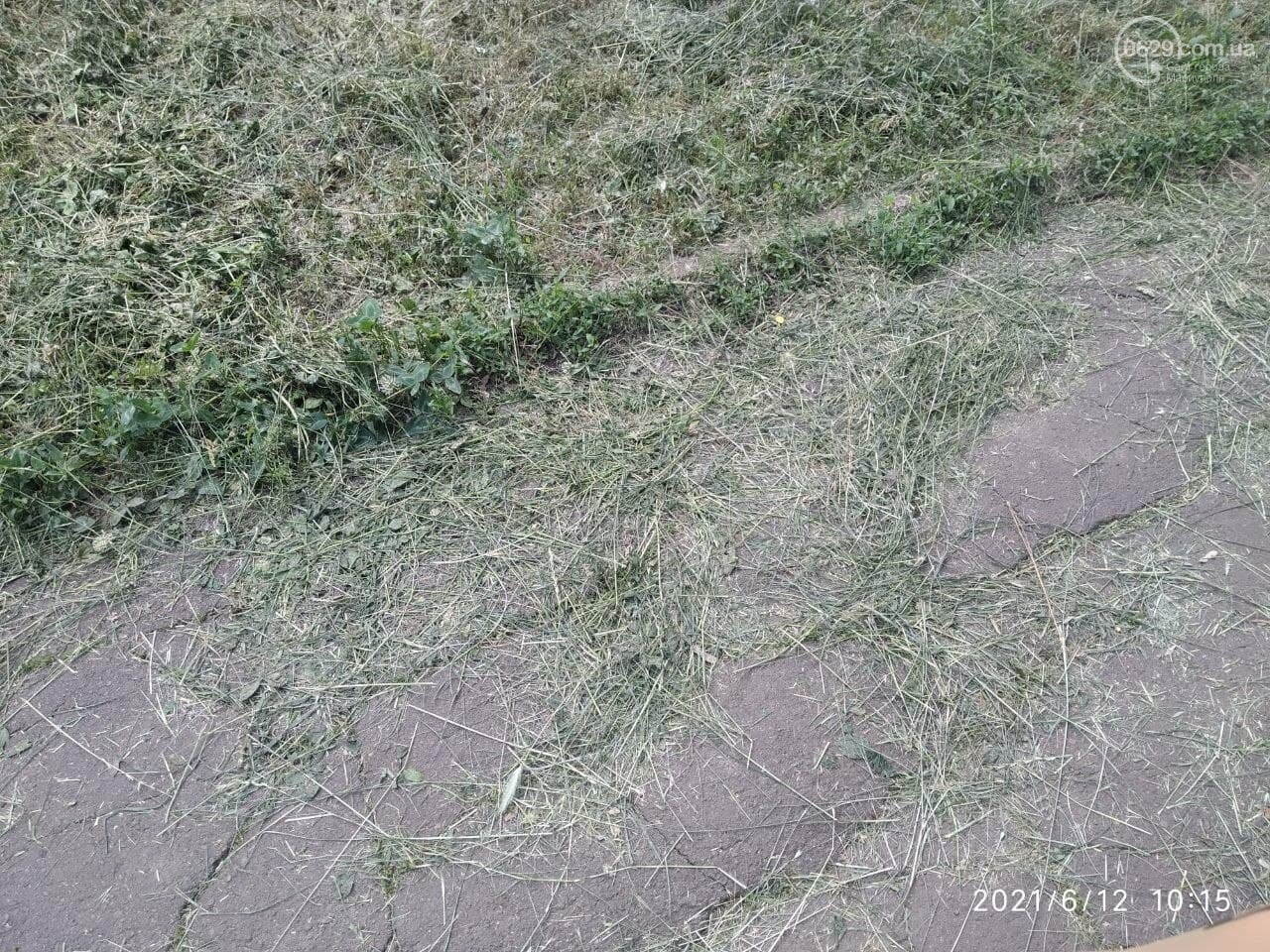 В парке Победы после потопа снова оставили скошенную траву, - ФОТОФАКТ, фото-2