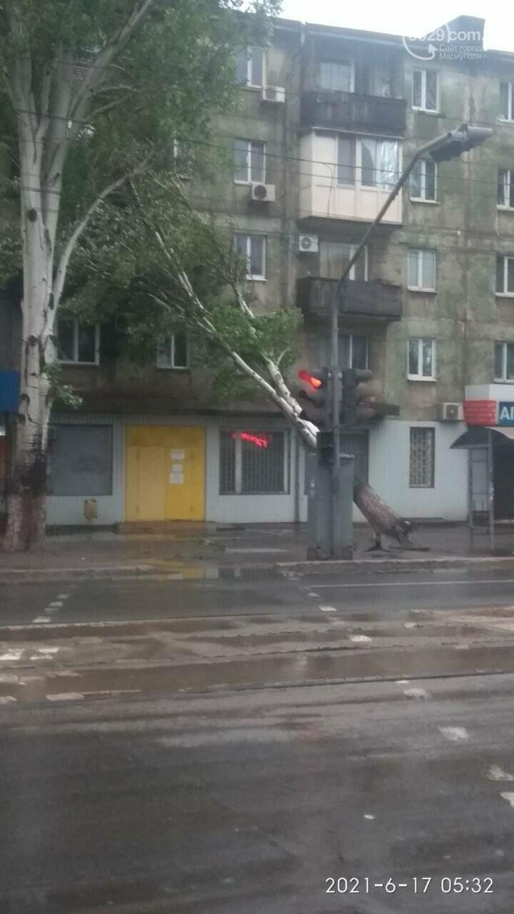 Прямо с корнем. В Мариуполе штормовой ветер валил деревья, - ФОТО, фото-1