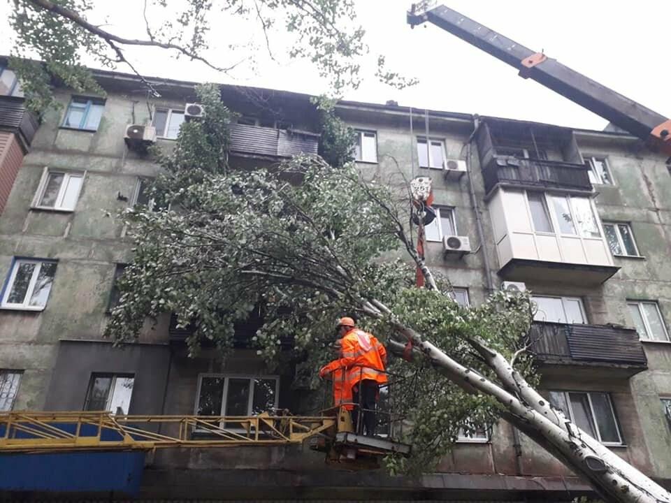 Прямо с корнем. В Мариуполе штормовой ветер валил деревья, - ФОТО, фото-3