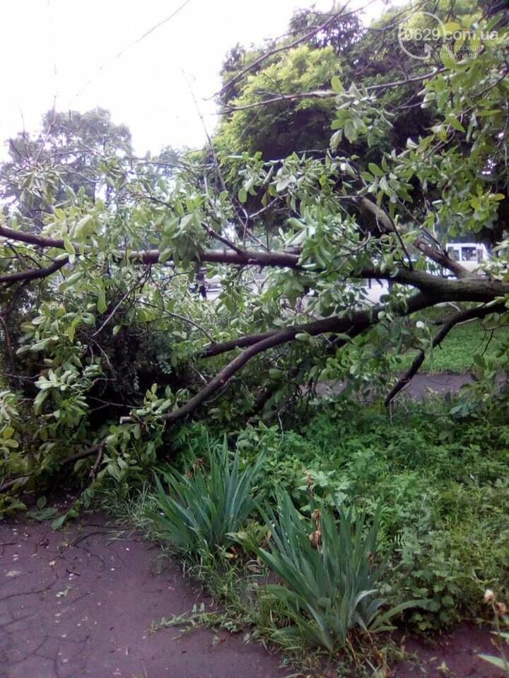 Прямо с корнем. В Мариуполе штормовой ветер валил деревья, - ФОТО, фото-4