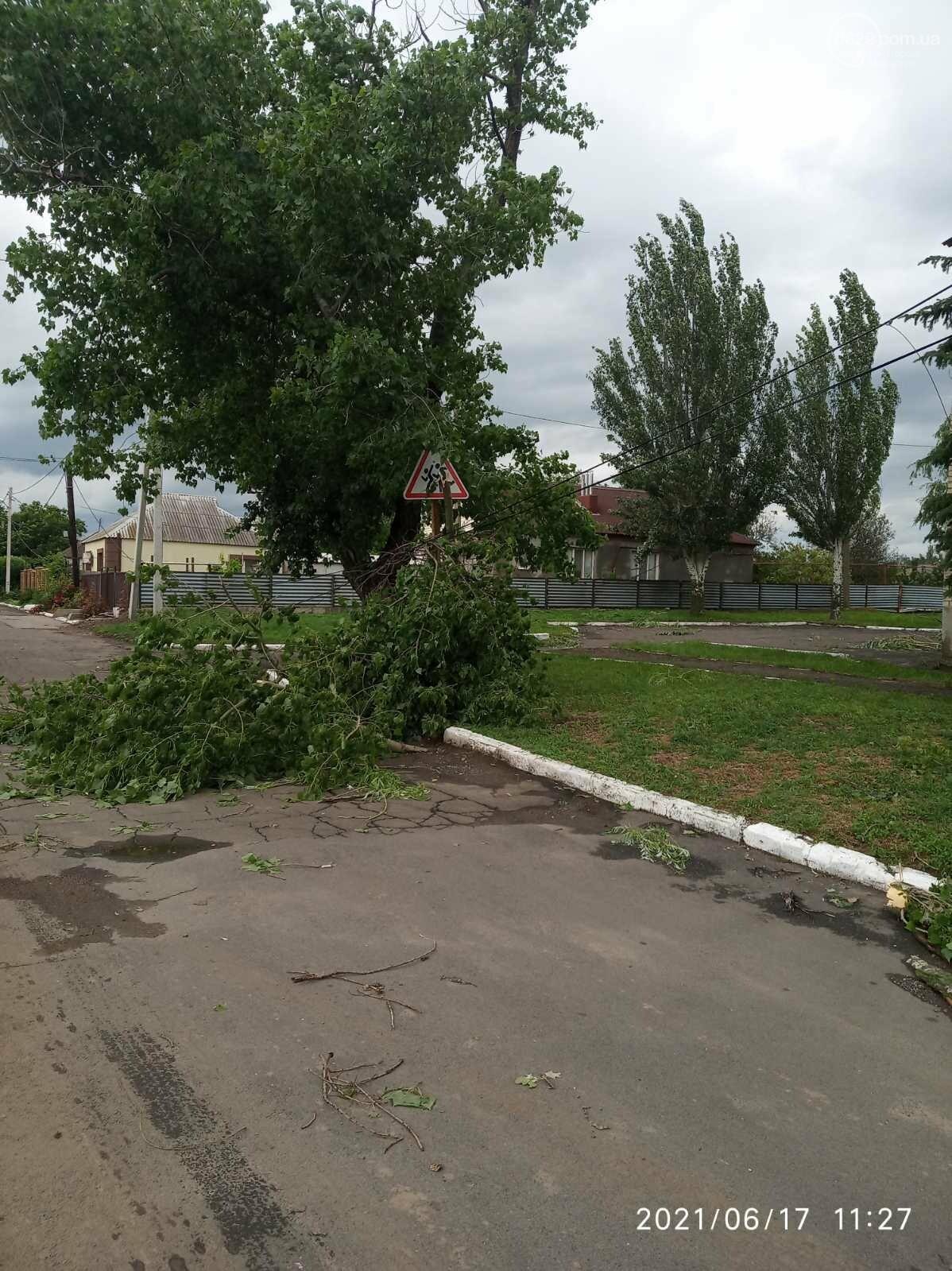 Прямо с корнем. В Мариуполе штормовой ветер валил деревья, - ФОТО, фото-5