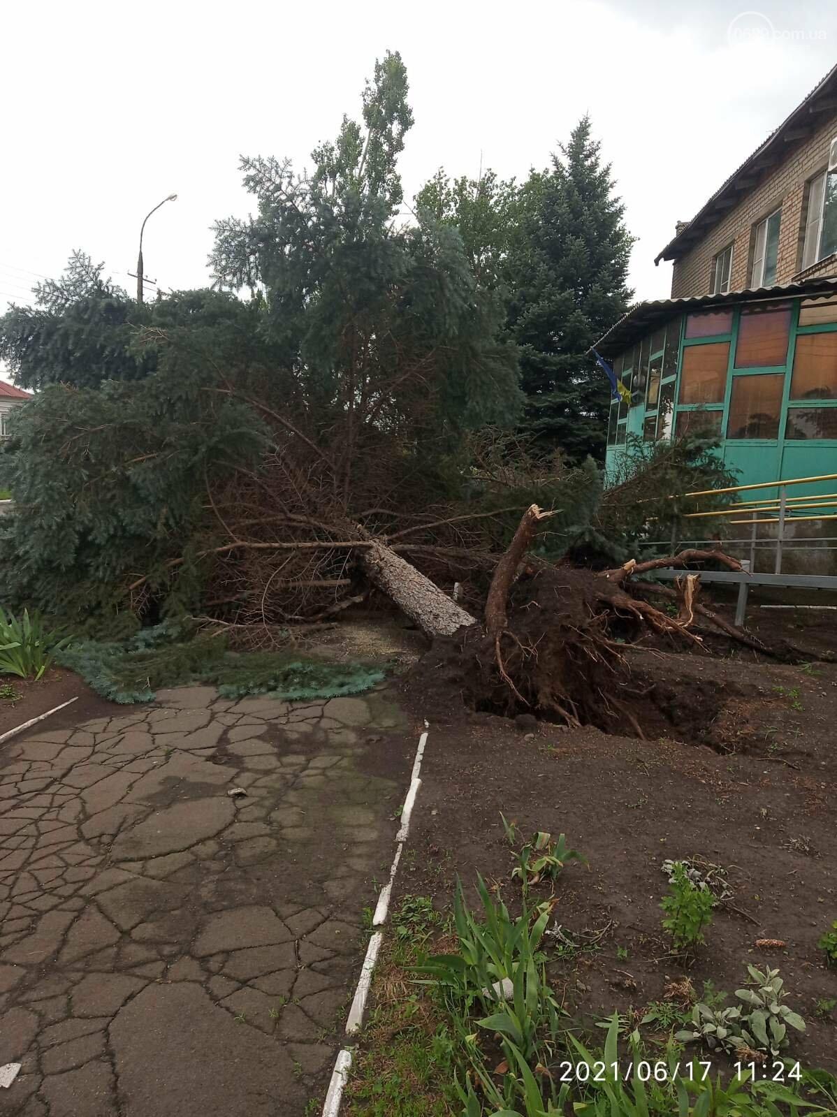 Прямо с корнем. В Мариуполе штормовой ветер валил деревья, - ФОТО, фото-7
