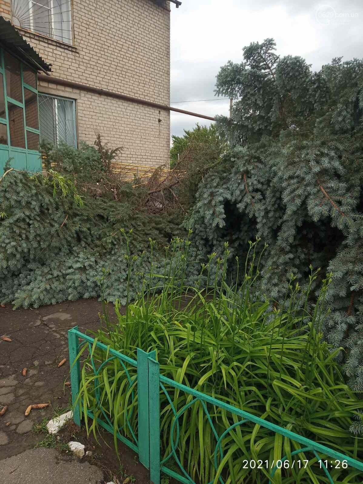 Прямо с корнем. В Мариуполе штормовой ветер валил деревья, - ФОТО, фото-8