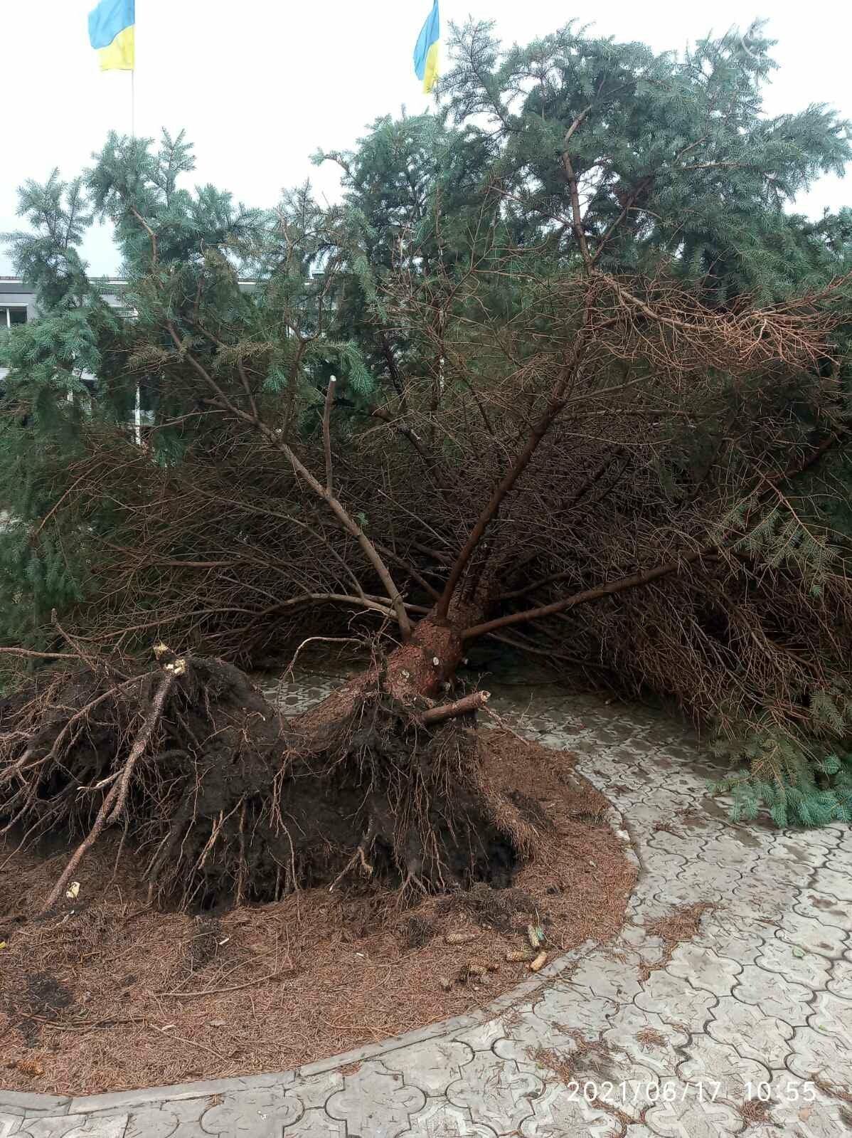 Прямо с корнем. В Мариуполе штормовой ветер валил деревья, - ФОТО, фото-9