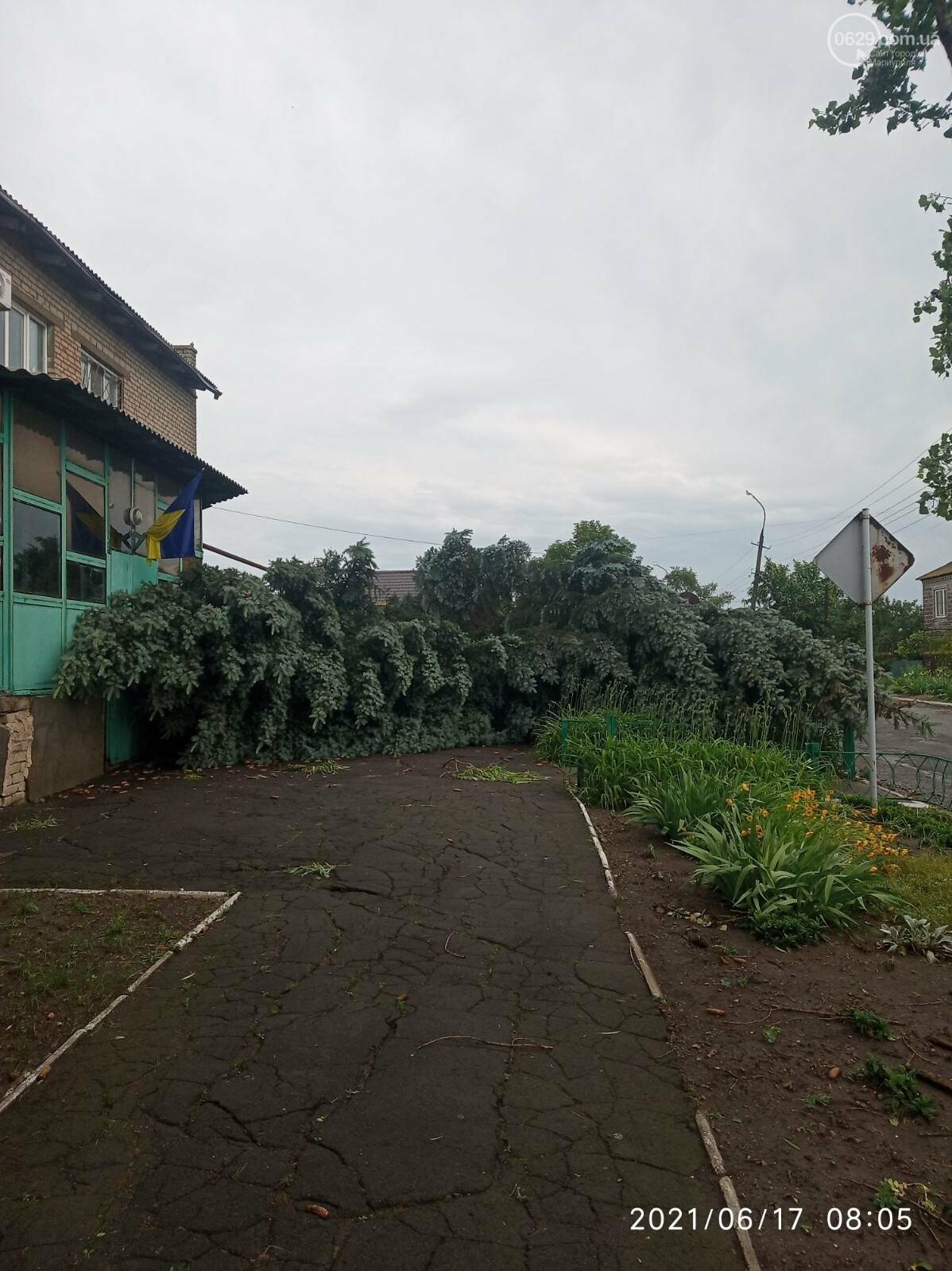 Прямо с корнем. В Мариуполе штормовой ветер валил деревья, - ФОТО, фото-10