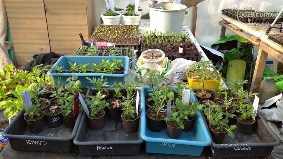 Мариупольчанка придумала, как получить большой урожай благодаря водорослям, фото-2