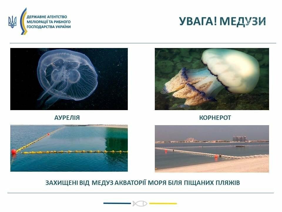 Выбрасывать, строить или есть!  Что делать с медузами, которые заполонили пляжи под Мариуполем, - ФОТО, фото-7