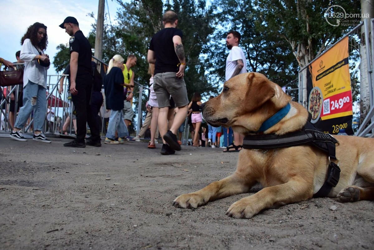 Крадіжки та наркотичні речовини на MRPL City Festival, - ФОТО, фото-1