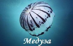 Логотип - Медуза, кафе