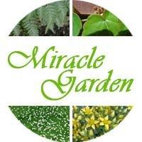 Логотип - Садовые растения. Собственное разведение. Частная коллекция растений MiracleGarden