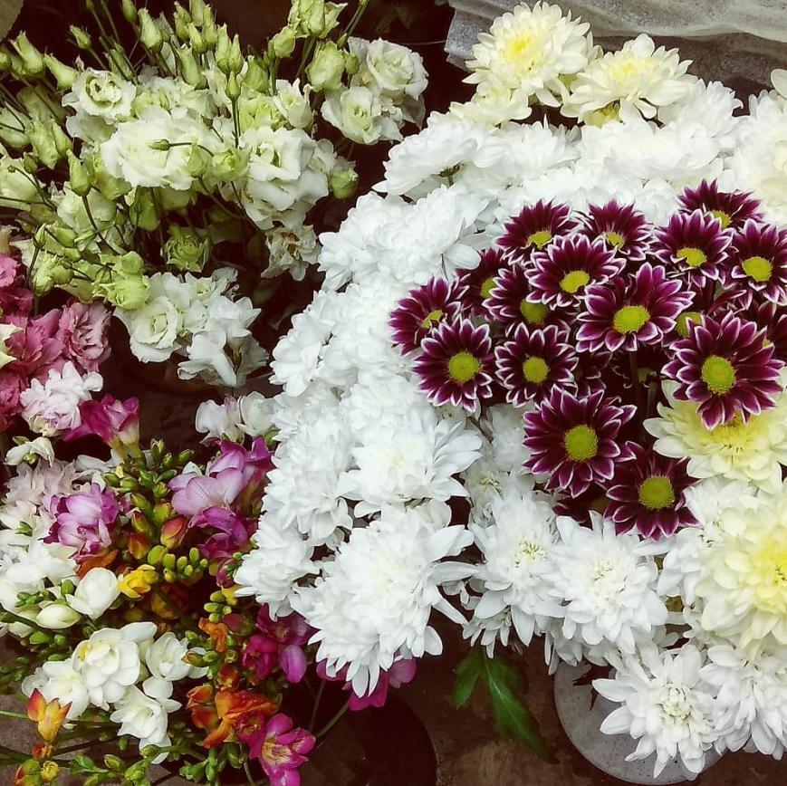 Наши цветы, фото-1