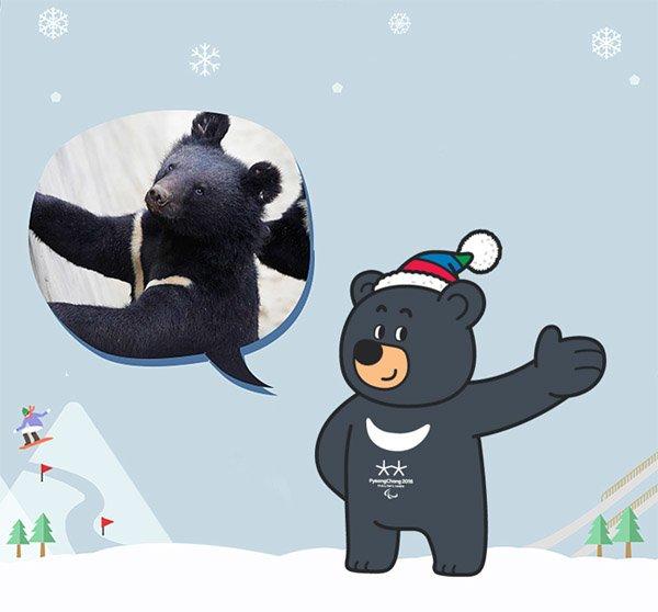 Сегодня стартуют  XXIII Зимние Олимпийские игры, фото-3