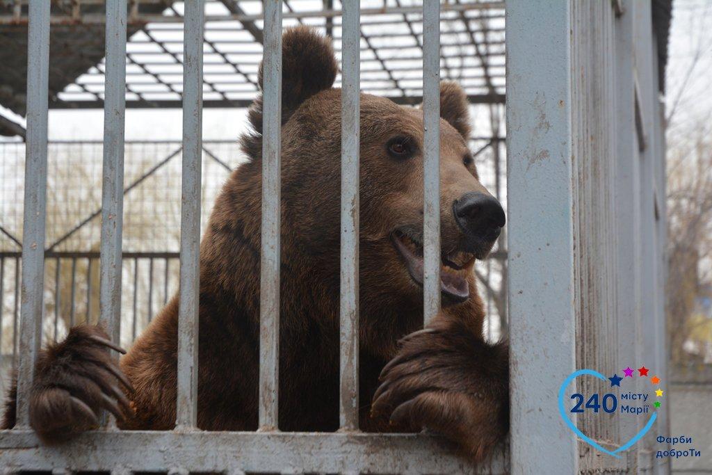 В Мариуполе спасли медведя Потапа, который застрял в автомобильной шине (ФОТО), фото-1