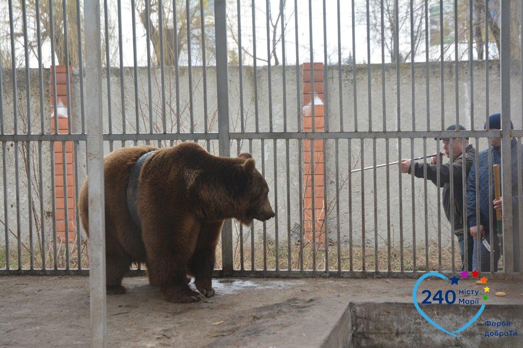 В Мариуполе спасли медведя Потапа, который застрял в автомобильной шине (ФОТО), фото-3