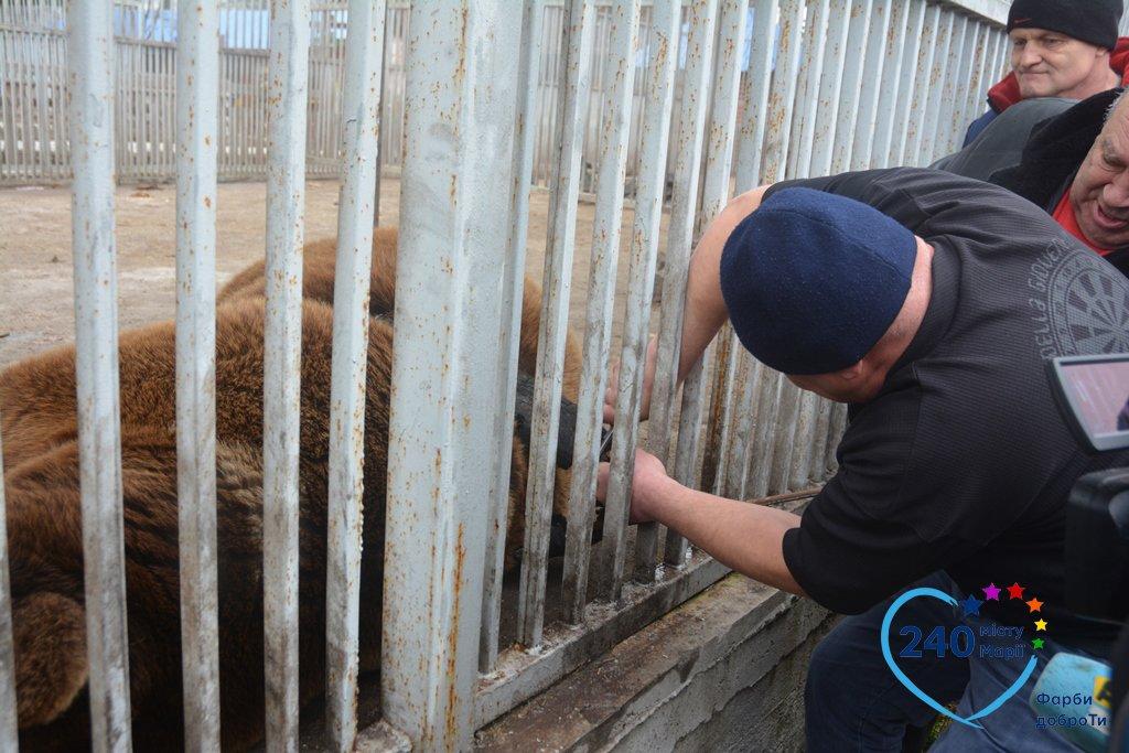В Мариуполе спасли медведя Потапа, который застрял в автомобильной шине (ФОТО), фото-2