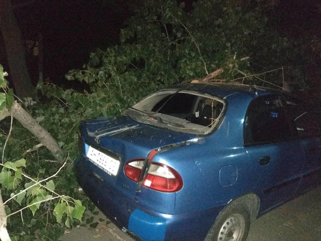 В Мариуполе на автомобиль упало дерево, - ФОТО, фото-2