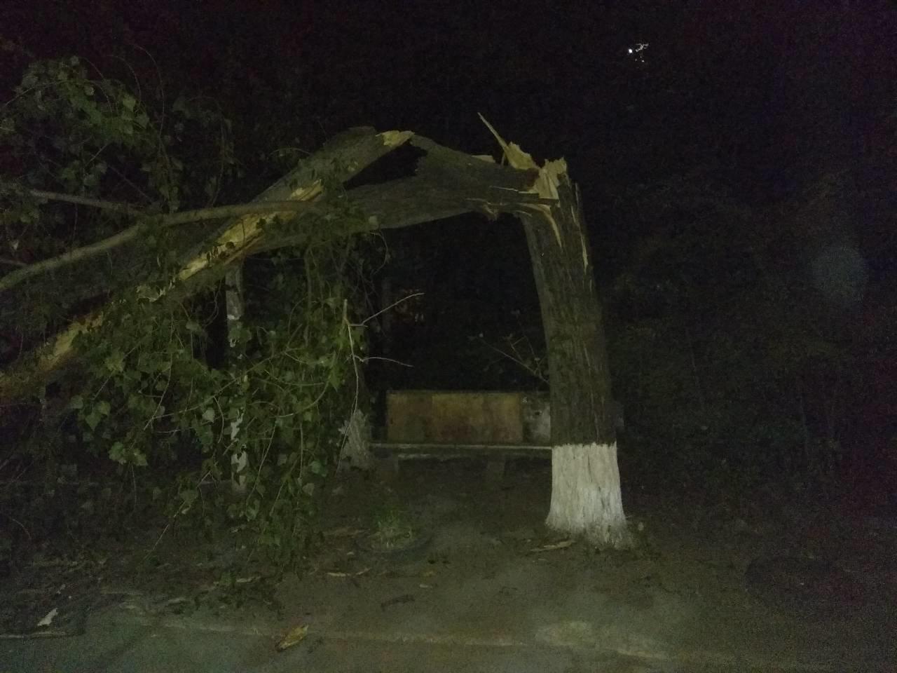 В Мариуполе на автомобиль упало дерево, - ФОТО, фото-1