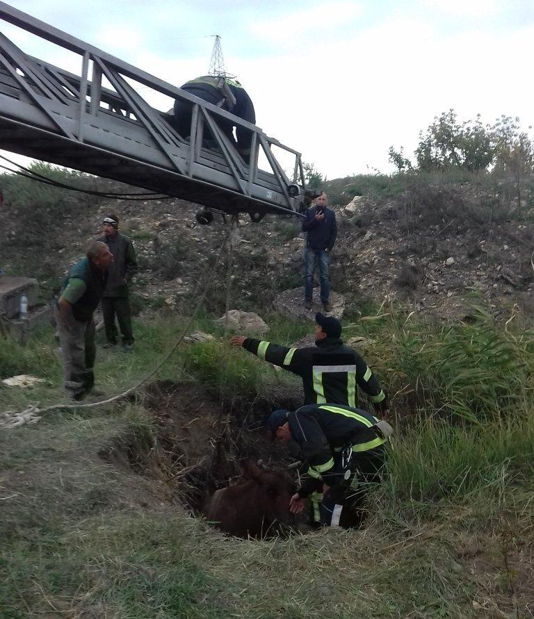 В Мариуполе спасатели достали корову из трехметровой ямы, - ФОТО, фото-1