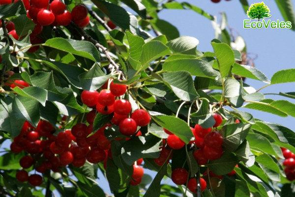 Плодовый сад – лучшее украшение для вашего участка, фото-1
