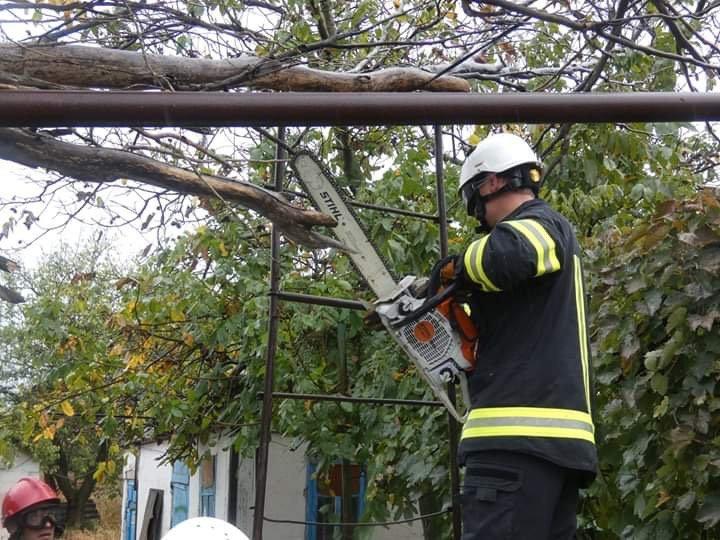 Под Мариуполем тополь упал на газопровод,-ФОТО, фото-3