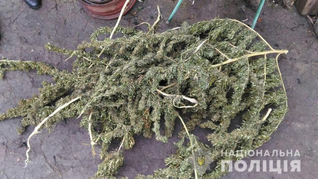 Марихуана на 300 тысяч гривен: мариуполец на дому наладил производство наркотиков, - ФОТО, фото-8
