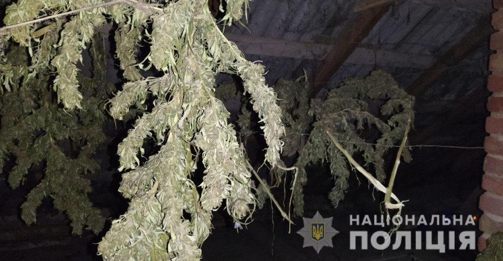 Марихуана на 300 тысяч гривен: мариуполец на дому наладил производство наркотиков, - ФОТО, фото-1