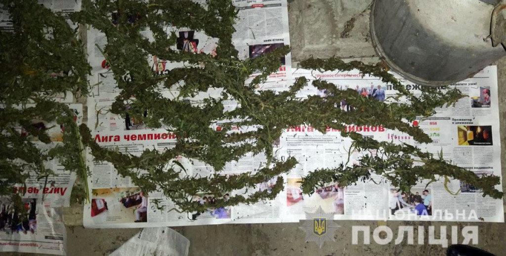 Марихуана на 300 тысяч гривен: мариуполец на дому наладил производство наркотиков, - ФОТО, фото-2