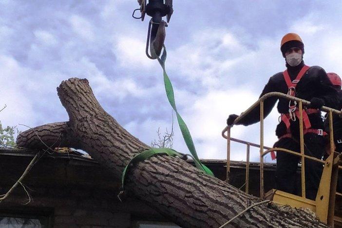 Последствия шторма. В Мариуполе 15-метровое дерево чуть не разрушило детский сад, - ФОТО, фото-3